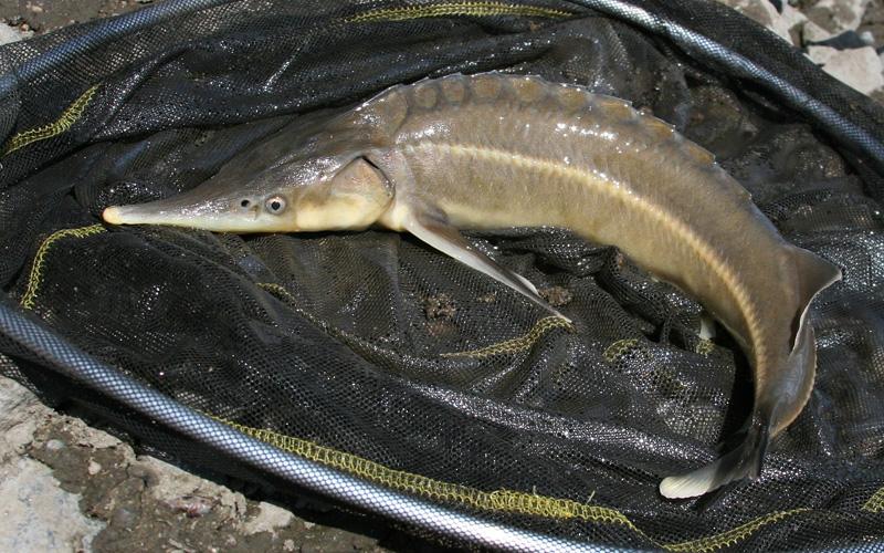 ryby datování přihlášení afrodita online datování