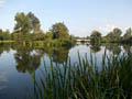 Vznik a historie rybníku Včelínek