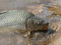Ryby z přehrady Pařížov