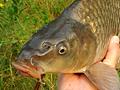 Co dělat, když ryby na jaře neberou...