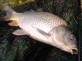 Co dělat, když ryby na podzim neberou?!