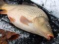 Co dělat, když ryby v zimě neberou