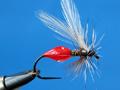 Vážeme: Mravence a suchozemský hmyz
