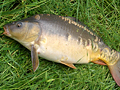 Migrace ryb - 3. díl