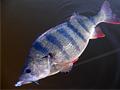 Na rybách s blbcem (1.díl)
