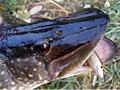 Na rybách s blbcem (3.díl)