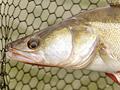 Jíte ryby? (3. díl)