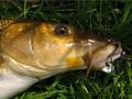 (NE) přirozená potrava ryb