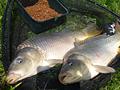 Strategie lovu feederem – A zase krmení…