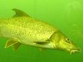 Několik věcí, které vám o rybaření nikdo předem neřekne