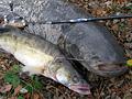 Příhody (ne)obyčejného rybaření – 1.