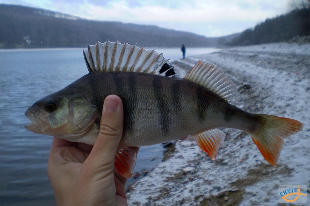 Spousta ryb seznamka pof spousta ryb