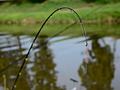 Historie lovu ryb 14. Sportovního rybolov 1989 po současnost